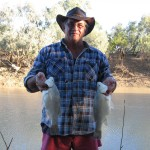 Pan size yellowbelly from Longreach Qld.